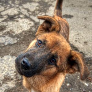 cute-puppy-closeup
