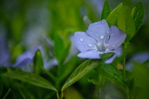 purple-flower-closeup