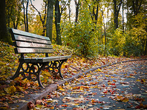 wooden bench in a park in autumn