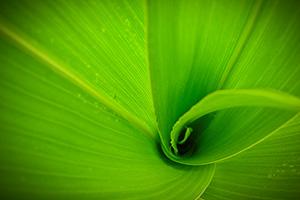 Corn-leafs-closeup_01
