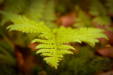 fern-leaf-close-up