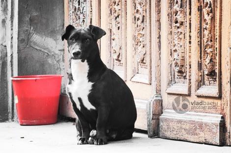 fine-art-print-black-dog-guarding-a-vintage-wooden-door