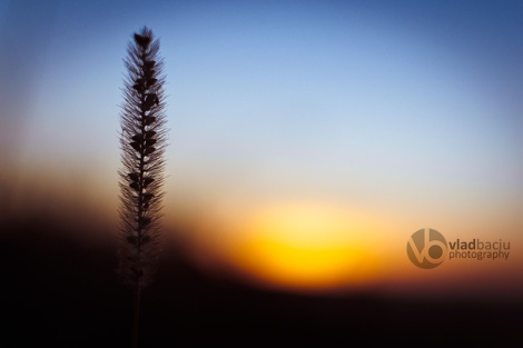 fineart-photo-print-blurred-sunset-with-a-weed-closeup
