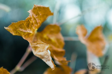 fineart-photo-print-yellow-grape-leaf-closeup