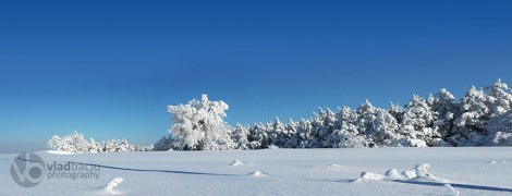fine-art-for-prints-panorama-with-trees-covered-with-show-in-a-sunny-winter-day