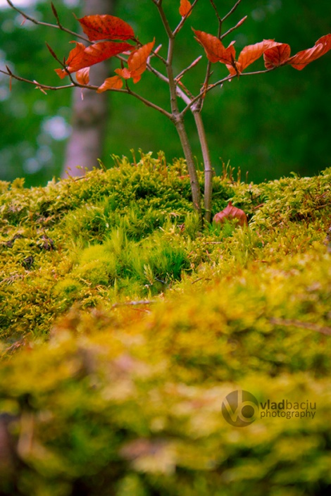 fine-art-photo-for-prints-Moss-close-up-with-a-small-branch-with-red-leafs
