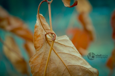 fine-art-photo-for-prints-Red-leafs-close-up