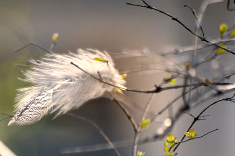 captured-feather_04