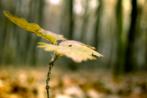 Small-branch-with-yellow-leafs-close-up